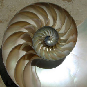 Spirales du nautile